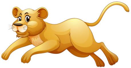 Little cub running alone