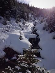 Bachlauf im Winterwald