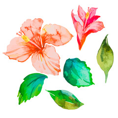 Set of tropical flowers. Hibiscus. Leaves. Watercolor vector.