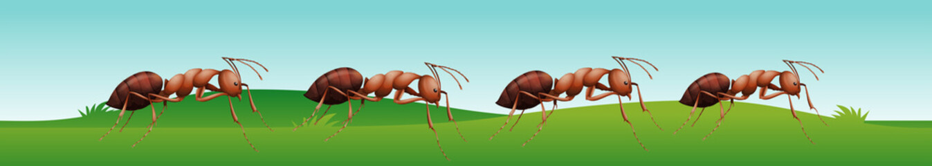 Four ants walking on the grass