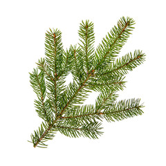 Fir branch on white