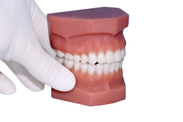 dentist hand show  model of teeth, isolated on white