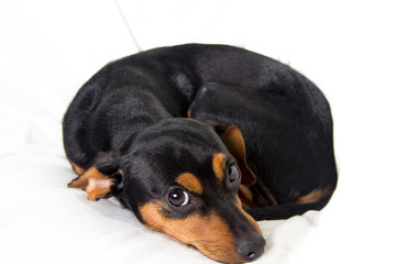 Adorable puppy on white background