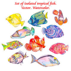 Set of tropical fishes. Vector