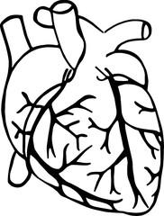 Сердце, здоровье, контурный вектор