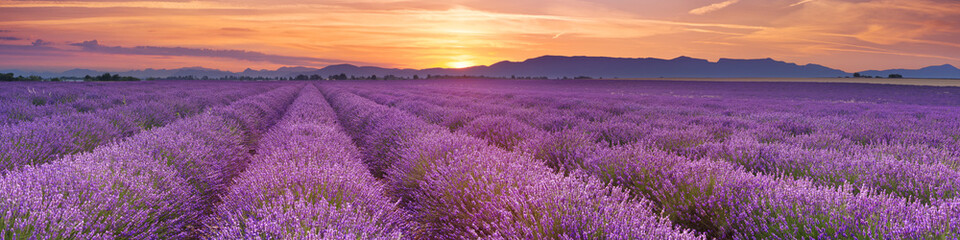 Tuinposter Lavendel Sunrise over fields of lavender in the Provence, France
