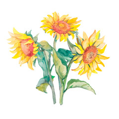 Sunflowers isolated. Watercolor,vector.