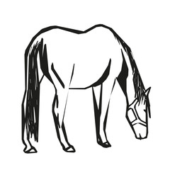 Horse grazes , vector drawing