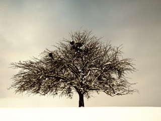 lonely tree (197)