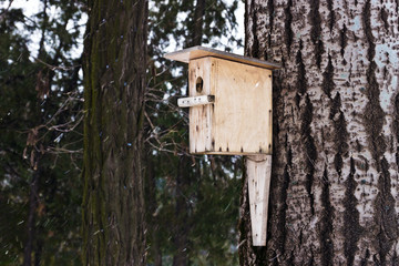 Nesting box on the tree during the winter