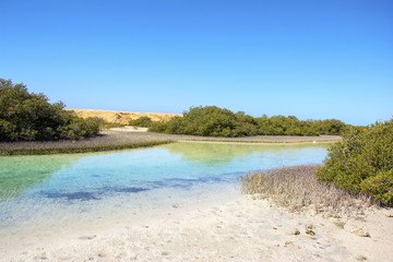 Mangrovie a Ras Mohammed