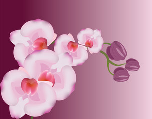 Orchid flowers background. Vector