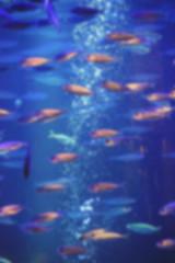 aquarium with fish, blurred for background