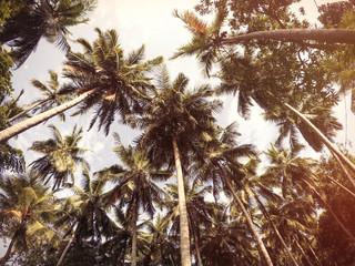 Palms tree and sky.