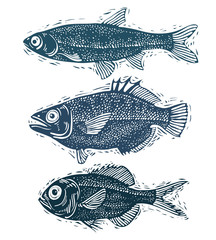 Set of vector fishes, different underwater species. Organic seaf