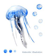 Watercolor jellyfish illustration.
