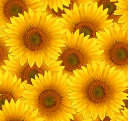 Wall Mural - seamless pattern flower sunflower