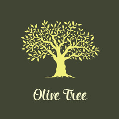 Beautiful magnificent olive tree isolated on green background. 