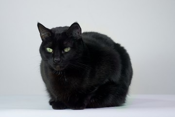 Black cat with a white background