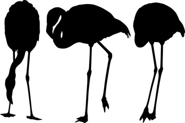 set of three flamingo silhouettes isolated on white