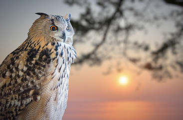 Fotoväggar - owl portrait and winter sunset