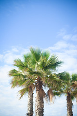Palm trees, travel, summer, vacation and tropical beach concept.