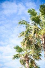 Palm trees over a beautiful blue sky