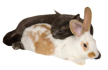 Gatto e coniglio dormono insieme abbracciati.