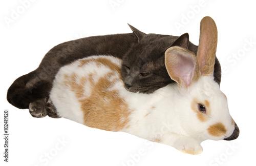Gatto E Coniglio Dormono Insieme Abbracciati Immagini E Fotografie