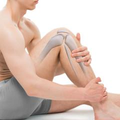 Knee Bone Anatomy isolated on white