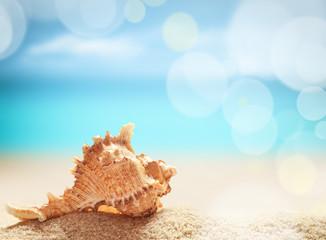 Seashell on the summer beach.