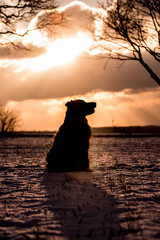 Silhouette of a dog in the sunset sitting in the snow