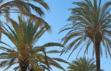 Beautiful palm trees with a shinny blue sky