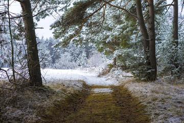 Deserted path through a snowy forest