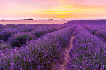 Papiers peints Lavande Beautiful landscape of lavender fields at sunset in Provence