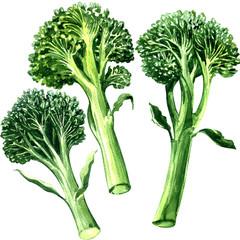 Three green bimi, broccoli isolated, on white background