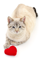 Wall Mural - Cat with red heart.