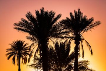 Palmen im Sonnenuntergang - Kitsch