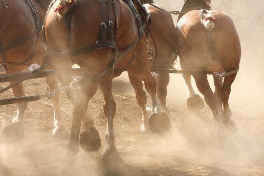 Horses Running through Field, Kicking Up Dirt