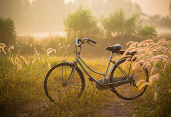 bike on a grass flower in the morning
