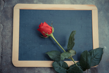 red rose on blackboard