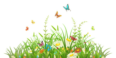 Spring green grass with flowers and butterflies on white background