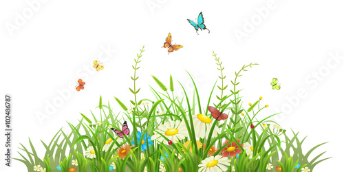 Grass and flowers background Photography Romantic Spring Green Grass With Flowers And Butterflies On White Background Fotolia Spring Green Grass With Flowers And Butterflies On White Background