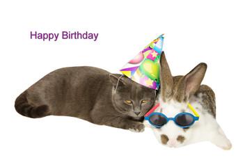 Cartolina d'auguri di buon compleanno: animali vestiti a festa.