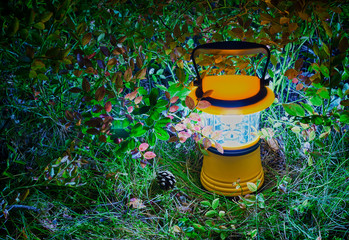 Luminous hand lantern surrounded by foliage of blueberry on the ground. HDR..