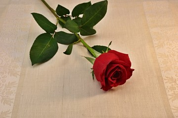red rose on the table