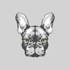 Hand drawn french bulldog portrait