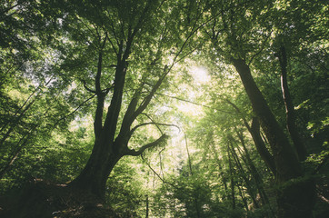 sunshine in green natural forest