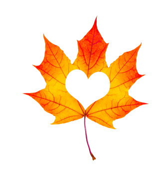 Fall In Love Photo Metaphor. Red Maple Leaf With Heart Shaped is
