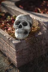 halloween skull waxwork on the stone